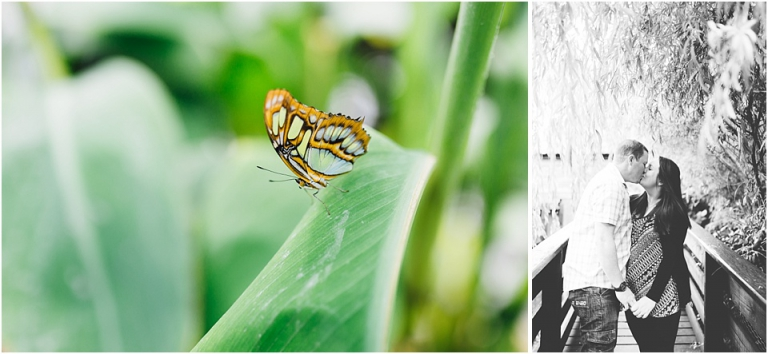 3 Buckfast Butterflies & Otter Sanctuary Pre Wedding Photography in Devon - close up butterfly and couple kissing