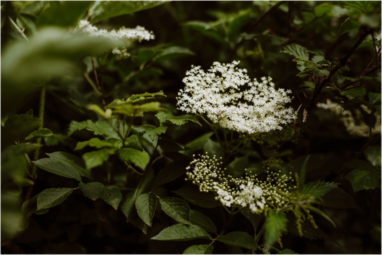 Elderflower Champagne Brewing – Holly Collings Photography (1)